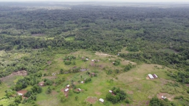 Почти две трети тропических лесов в мире уничтожено