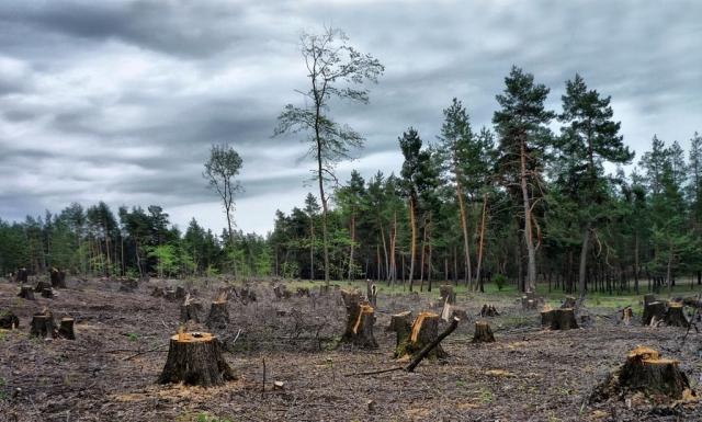 «Рубить нельзя оставить». Депутаты против вырубки 595 деревьев в Актобе