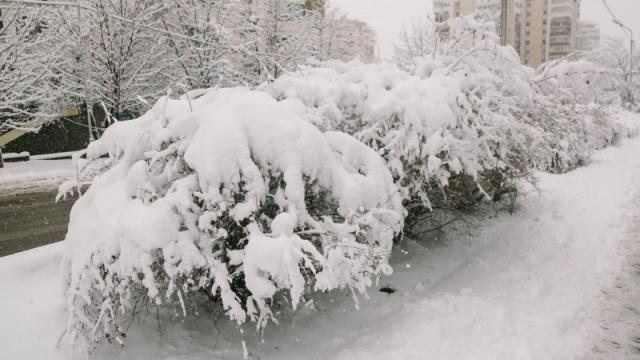 Аномалии в погоде зафиксировали в марте в Казахстане