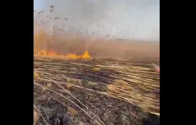 Пожары уничтожили огромную часть дельты реки Или в Алматинской области – Минэкологии