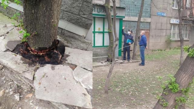 За облитое керосином дерево наказали бизнесмена в Алматы