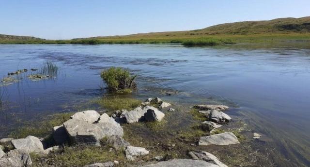 Ловлю рыбы запретили в реках Северного Казахстана из-за нереста