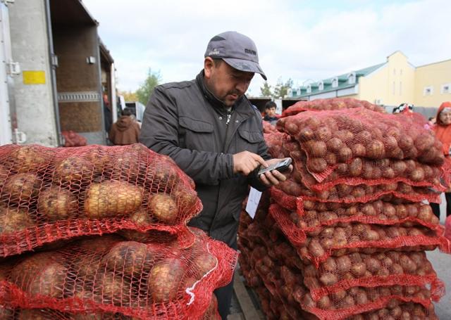 Картофель начал дешеветь в регионах, правда, пока не везде