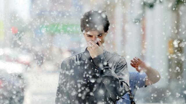 Аллерголог рассказала об опасности тополиного пуха