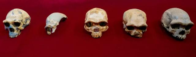 Череп дракона. Китайцы выдали новую версию происхождения Homo sapiens