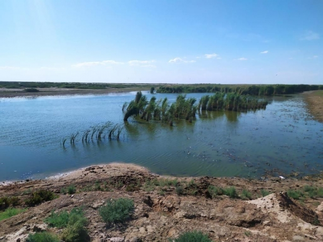 В одном из водоемов Атырауской области обнаружен мор мелкой рыбы