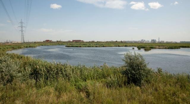 Экологи бьют тревогу из-за строительства на озере с краснокнижными птицами в Нур-Султане