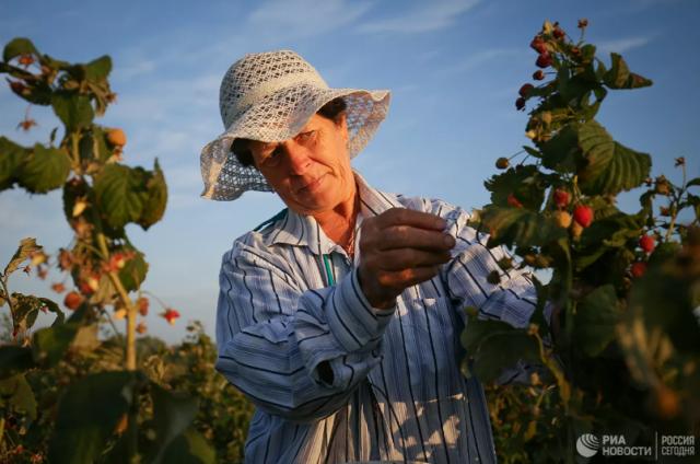 Гастроэнтеролог рассказала, какие садовые ягоды лучше не есть