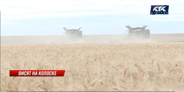 Подорожание зерна в Казахстане приведет к повышению цен на продукты, считают эксперты
