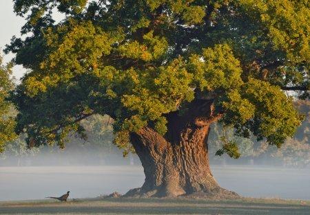 Дубы вместо карагачей: 7 000 деревьев посадят в Актобе