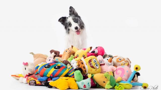 Собаки учат слова так же быстро, как и годовалые дети - исследование